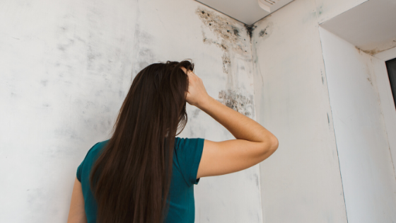 Can I Sue My Landlord For Black Mold?