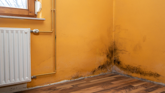 Is Staying In A Room With Mold Bad For You?