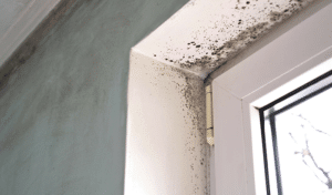 Things You Can Do to Prevent Mold Growth in Your Home