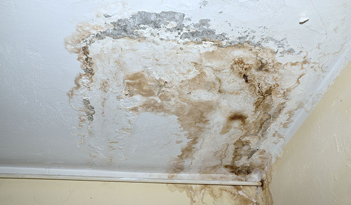 The-Scary-Reality-of-Mold-in-Your-Home