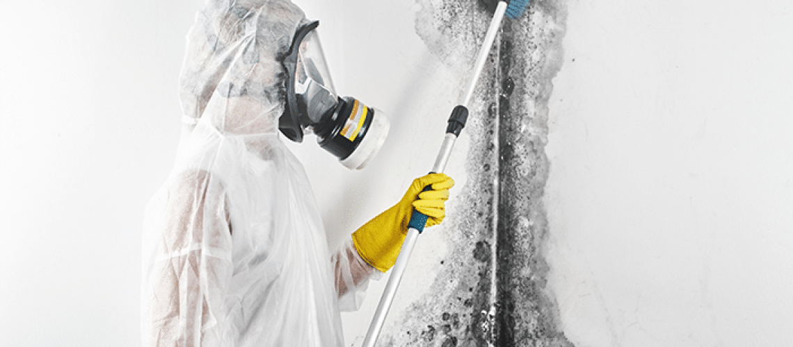 5 Reasons to Leave Mold Remediation to the Professionals