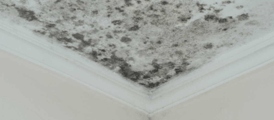 everything-you-need-to-know-about-mold