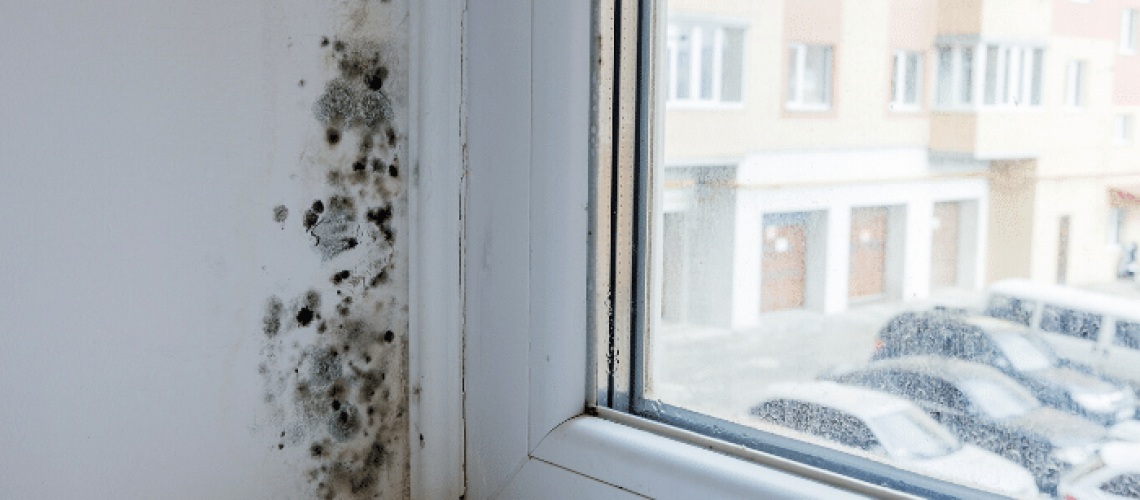 How Do You Stop Black Mold?