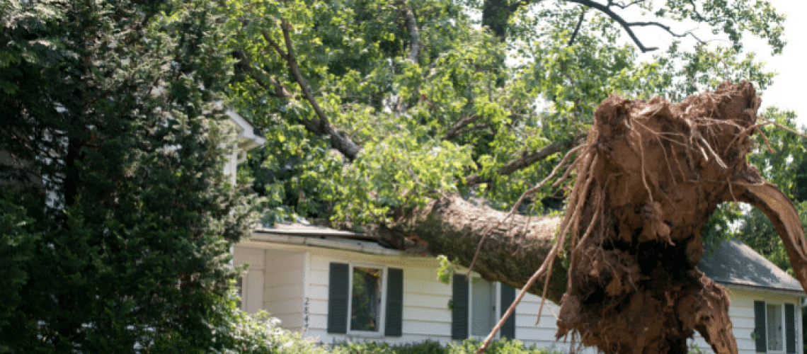 tips-to-prevent-wind-damage