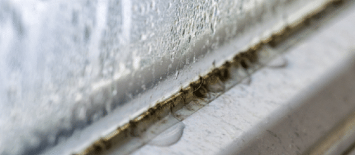 where-to-look-for-mold-in-your-home